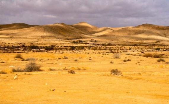 пустыня - псалом 89 - молитва моисея